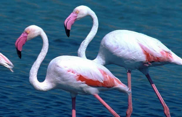 Tours Cagliari: Cagliari Flamingos Bike Tour: Admire the PInk Flamingos and Poetto beach of Cagliari in Sardinia